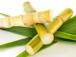 Zuckerrohr mit Blätter